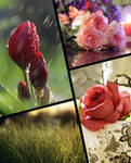 Flowers and Nature Collection Wallpapers 2019 by fisabilillah