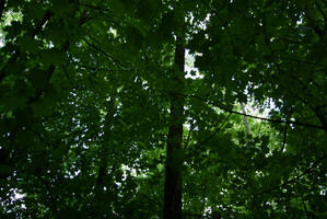 Canopy by MrProsser42