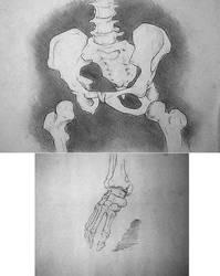 Sketchbook - skeletal studies by docdavis