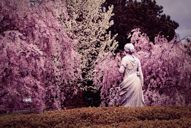 The blossoms of spring by Qwara