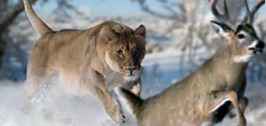 American Lion by PhilipEdwin