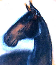 Horse in pastel 8 by Magdalena888