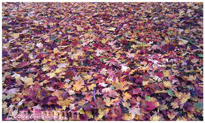 Autumn by vincitrice