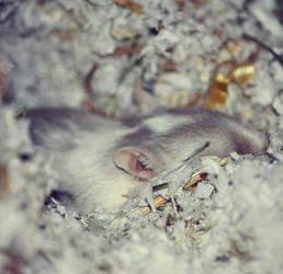Sleeping Beauty by vincitrice