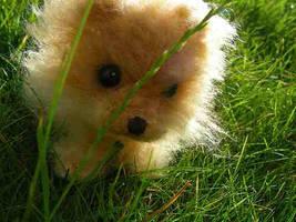 Pomeranian by RomanSock