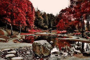 Red autumn colours by TheEscapistInTokyo