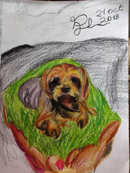 Drawing-Yorkie by MiguePuchis