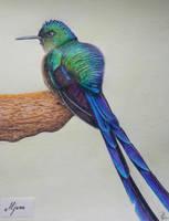 Grumpy colibri by Aljuna