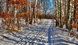Winter by miirex