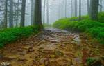 Misty path by miirex