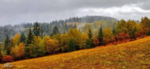 Autumn view by miirex