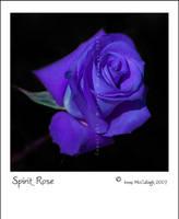 Spirit Rose by substar