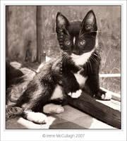 Kitten Kalli by substar