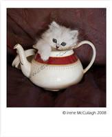 Teapot Chinchilla by substar