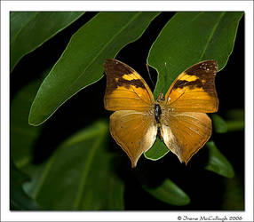 And Another Butterfly by substar