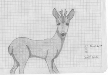 Young Deer by sakurayukichan2001