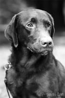 Max - Portrait by furryphotos