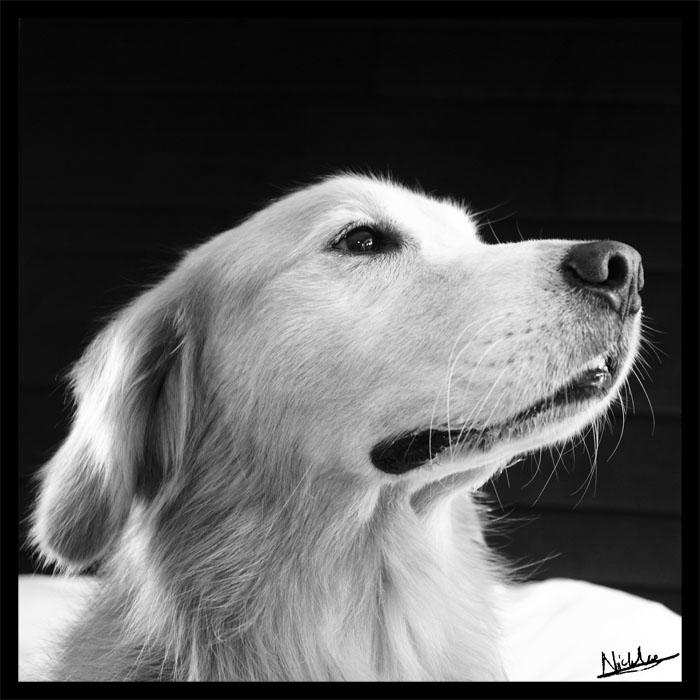 Max - Profile by furryphotos