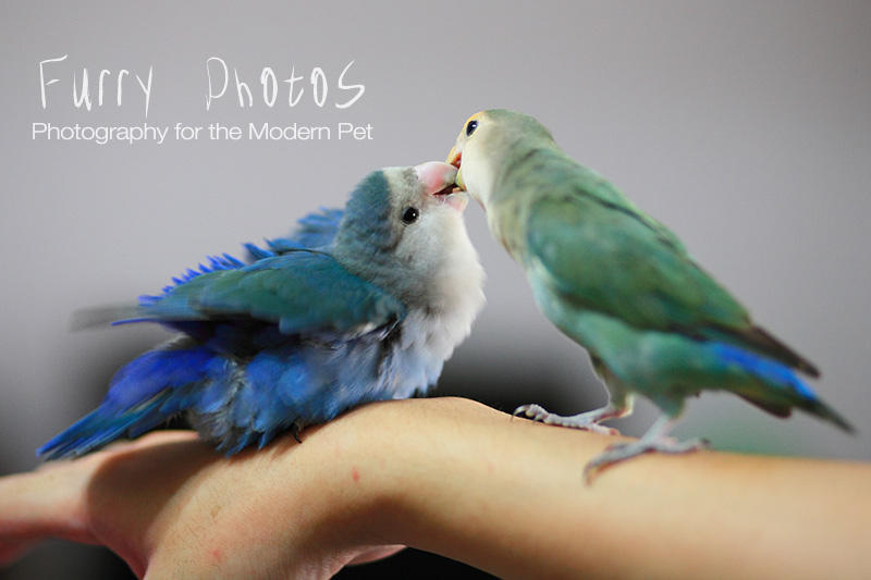 Bluey and Greenbean by furryphotos