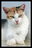 Cat Portrait - Suave by furryphotos