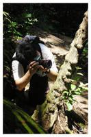 Raptor ID - Hunting by furryphotos