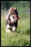 Happy - Free Spirit by furryphotos