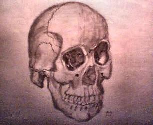 Skull by PissedOffPuppet
