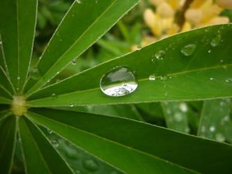 Rain drop on leaf II by edvordo