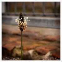 Lonely by Giledhel-Narya