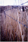 Fence and Grass by eep