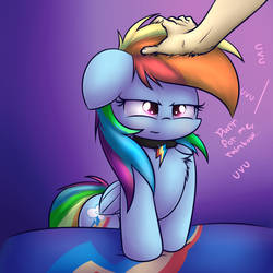Pet teh Dashie uvu by HeavyMetalBronyYeah