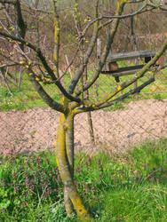 Tree Love by laracoltt