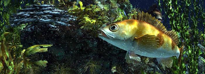 Rockfish by 3DVitality