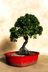 Rhizophora Bonsai by 3DVitality