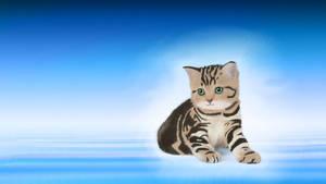 Meow Wallpaper by Zarcher