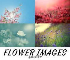 #1 FLOWER IMAGES by Ha-Bi-K-P