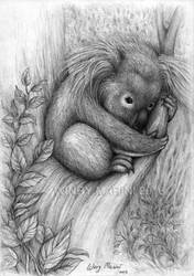 Baby Koala by winrymarini