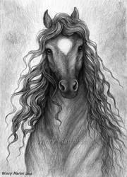 Black Beauty by winrymarini