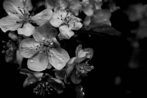 Untitled Flowers III by lustdrunk