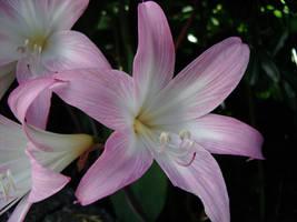 Uma flor... uma pequena flor by 3ch3lon