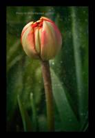 Spring Poem by Violet-Kleinert
