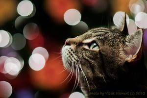 Happy New Year by Violet-Kleinert