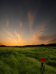 Sunset II by Violet-Kleinert