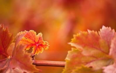 Autumnal by Mimilotka