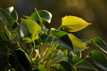 Golden hour by Mimilotka
