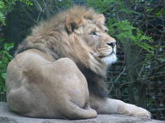 Lion by xThe-Twilight-Wolfx