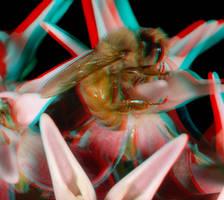 Bee on Milkweed by DDDPhoto
