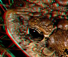 Eye of Toad by DDDPhoto