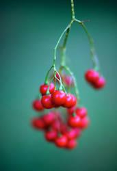 Berries by strictfunctor