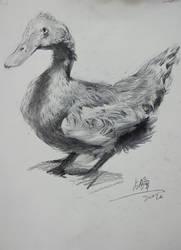 duck sketch by zephyr0713